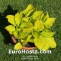 Hosta Paradise Island - Eurohosta