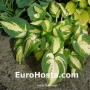 Hosta Reversed - Eurohosta