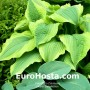 Hosta Satisfaction - Eurohosta