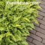 Farebné hosty Eurohosta