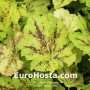 Tiarela Happy Trails - Eurohosta
